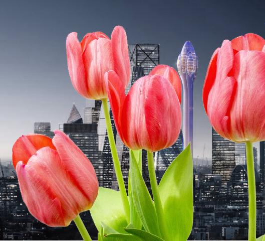 Tulip Building